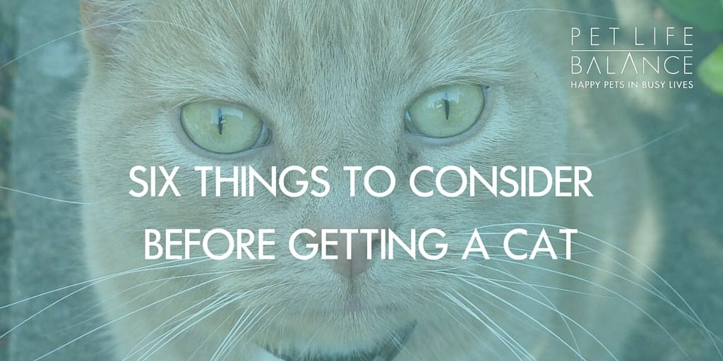 cats tips