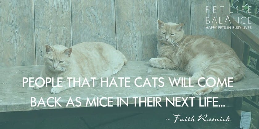 People that hate cats will come back as mice in their next life.
